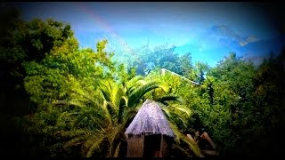 3HOURS The Amazon rainforest sounds - Jungle in Venezuela