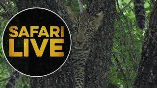 safariLIVE - Sunrise Safari - May, 18. 2018   Kholo.pk