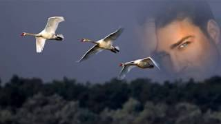 Ты от меня далека!!!!..Рустам Бадалов!!!!Отличная песня и музыка!!