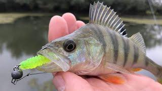 Осенняя рыбалка с друзьями на степняке!) Щука, Окунь