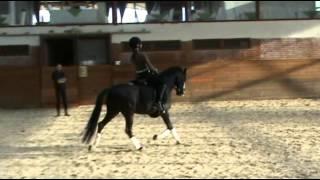 video of Limetree Aracorn