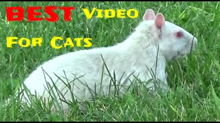 BEST Videos For Cats to Watch , Birds, Squirrels, Rabbits, Chipmunks, Pigeons,