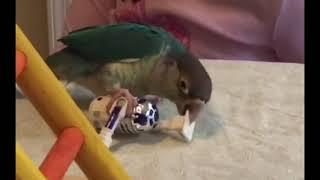 Зеленый попугай тешит взгляд | Приколы до слез - Collab #56