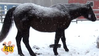 Snow Stallions! | The Best Cute, Funny Animal Videos Compilation #6 | AFV Pets