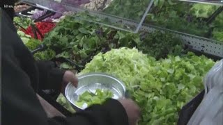 Most romaine lettuce now safe to eat