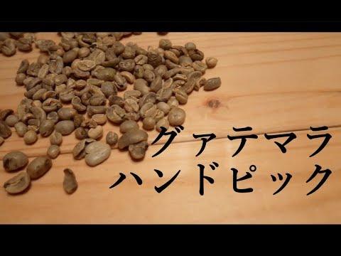 美味いコーヒーを飲みたい!グァテマラの生豆をハンドピッキング!