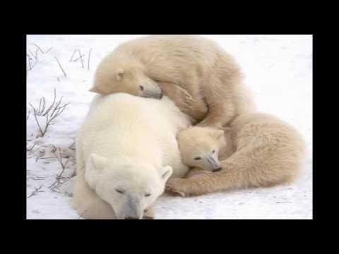 Polar Bear Photographer Posts Precious, Smithsonian Award Winning Images of Mama and Cubs
