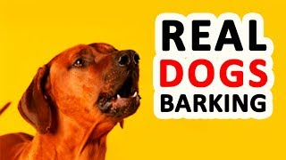 12 REAL DOG BARKING Sounds to Make your Dog go Crazy HD