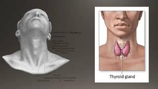 Basics of Thyroid Ultrasound