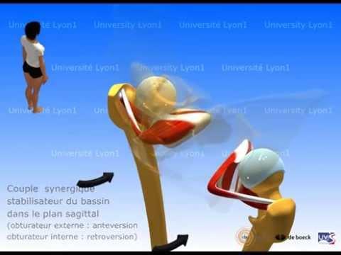 Les exemples du muscle de la poitrine