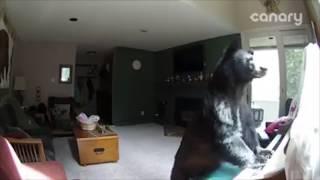 Смотреть онлайн Медведю понравилось пианино