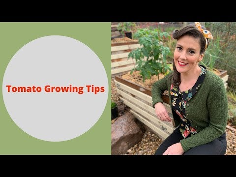 Tomato Growing 101 // A Beginners Guide to Growing Tomatoes // The Gardenettes