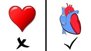 Why Heart Is The Symbol Of Love | दिल का निशान ऐसा क्यों दिखता है | In Hindi