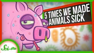 5 Times People Gave Animals Diseases | Reverse Zoonotics
