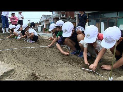 種子島の学校活動:現和小学校3・4年生落花生種植え体験2018年