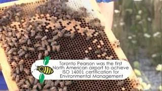 Did you know the airport is home to 15 bee hives Check