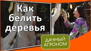 Как белить деревья осенью: 3 секрета побелки деревьев #дачныйагроном