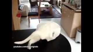 Кот попал в ловушку)))240