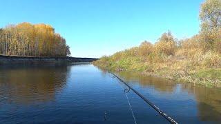 На что ловить в реке сейм 2020