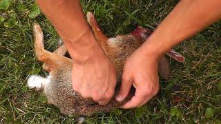 בחור יורה בקשת בארנבת בראש וזורק אותה