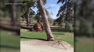 Trees Falling Compilation #5