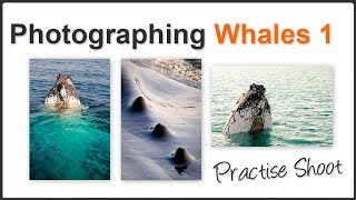 Photographing Whales Pt. 1