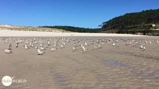 Große Versammlung am Praia de Nemina