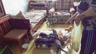 Кошек спасают малоимущие пенсионеры России | Pensioners save homeless cats|