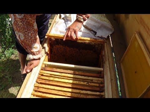 Состояние пчелы в июне на пасике Валентина