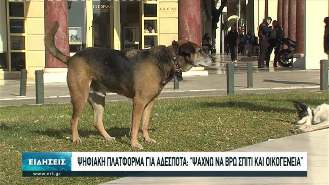 Πλατφόρμα υιοθεσίας αδέσποτων σκύλων από το Δήμο Θεσσαλονίκης | 08/01/2021 | ΕΡΤ