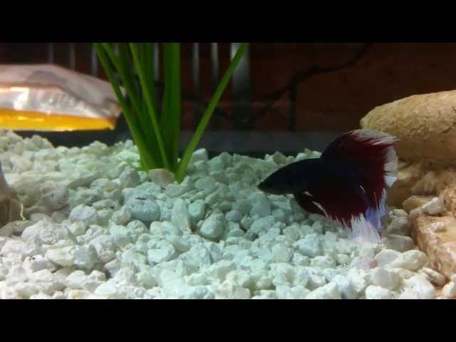 My best betta fish tanks