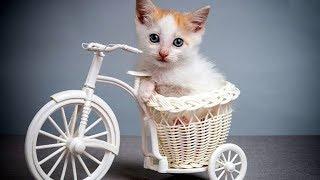 「猫かわいい」 すごくかわいい子猫 - 最も面白い猫の映画 #274