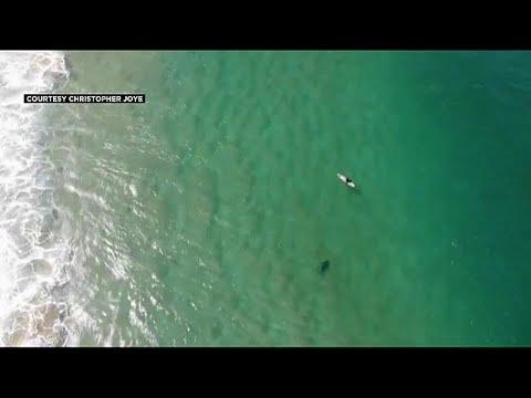 العرب اليوم - شاهد: تنبيهات من طائرة بدون طيار تنقذ سبّاحًا من هجمة قرش وشيكة