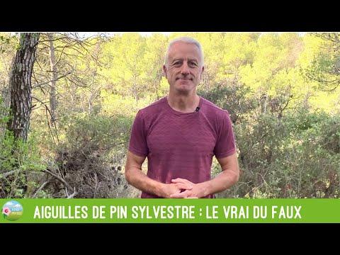 Aiguilles de pin sylvestre : le vrai du faux (suramine, acide shikimique, etc.)