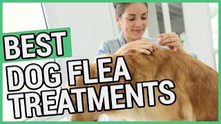 Best Flea Treatment For Dogs | 5 Best Dog Flea Treatments 2020 🐶 ✅