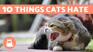 10 Things CATS HATE That You Should Avoid