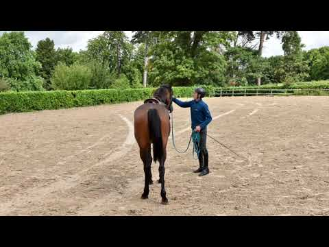 Will Plunkett explains the system he uses to break in and educate young horses.