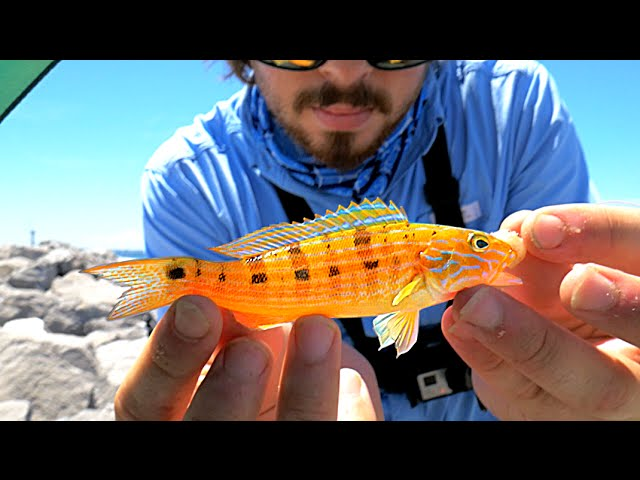 EASY Way to Catch Saltwater Fish!!