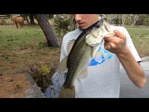 Pre-spawn pond bass fishing 2015