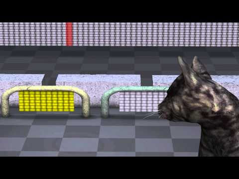 Quantum Mechanics:  Animation explaining quantum physics - YouTube