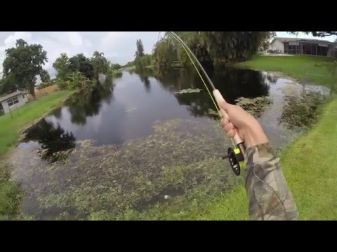 Fly Fishing for Bass in little pond (HD)