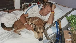 This Dog Refused to Leave His Owner's Hospital Bed  Their Journey and Friendship Made Us Cry