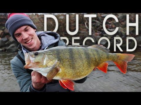 Hollandsk aborre på 54,5 cm.!