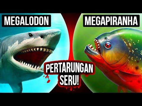 Bagaimana Jika Megalodon dan Megapiranha Saling Berhadapan?