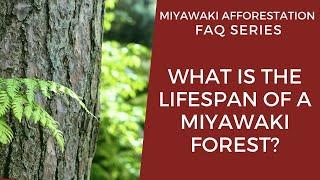 What is the Lifespan of A Miyawaki Forest?