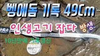 Opaleye rock fishing Store 88