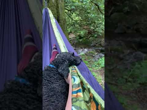 Video Of Montreat Family Campground, NC