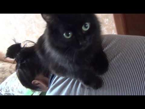 Кошка запрыгнула на спину хозяйке очевидно кошка лечит хозяйке спину Кошка Маляша