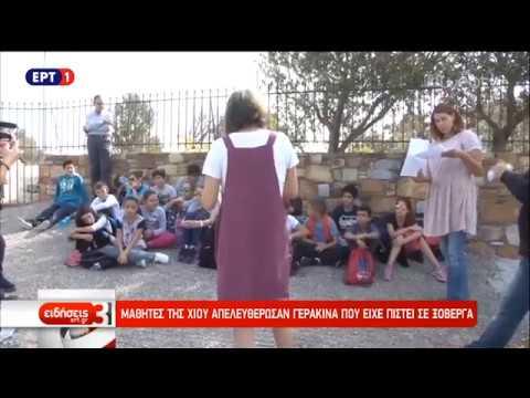 Μαθητές της Χίου απελευθέρωσαν γερακίνα που είχε πιαστεί σε ξόβεργα | 22/10/18 | ΕΡΤ