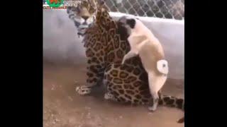 Funny animals videos 2019